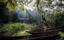 """Cuộc sống của thợ săn thú rừng """"bán thời gian"""" ở Congo"""