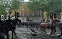 Nữ cảnh sát bị ngã ngựa, chấn thương nặng khi đối phó biểu tình