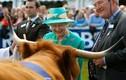 Nữ hoàng Anh Elizabeth II và tình yêu đối với động vật