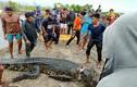 Rùng mình cá sấu khổng lồ ăn thịt người phụ nữ đi câu