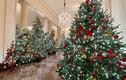 Ảnh: Nhà Trắng được trang hoàng lộng lẫy đón Giáng sinh 2020