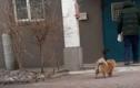Video: Chú chó ngày ngày ra bãi xe đợi chủ suốt 5 năm