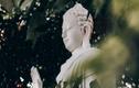 Nếu bạn đang chán nản với cuộc đời, hãy ngẫm 15 điều Phật dạy về hạnh phúc