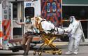 Mỹ: Số người nhập viện vì Covid-19 đạt mức kỷ lục kể từ tháng 1