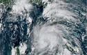 Mỹ chuẩn bị đón siêu bão Ida cực nguy hiểm