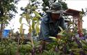 Đi tảo mộ thuê ở Sài Gòn, kiếm 30 triệu mỗi tháng