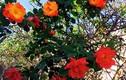 Khu vườn hoa tuyệt đẹp trong nhà Thúy Nga ở Mỹ