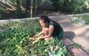 Nhà quê yên bình với vườn rau trái xanh mướt của Lê Phương