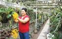 Nữ nông dân thăng hoa với lan rừng, thu vài tỷ mỗi năm