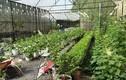 Ngắm vườn rau trái rộng 200m2 của ông bố trẻ Sài Thành