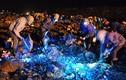 Ảnh: Mò phế liệu đêm ở bãi rác khổng lồ giữa Hà Nội
