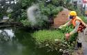 Ảnh: Đặt hàng độc quyền chế phẩm Đức giải cứu hồ bẩn Hà Nội