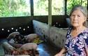 Bên trong trang trại toàn thỏ, chim, lợn rừng của bà giáo về hưu