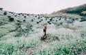 Chùm ảnh: Hoa cải phủ sắc trắng khắp núi đồi Mộc Châu