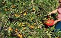 Điểm danh hoa quả quê hút khách dịp Tết