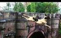 Bí ẩn rùng rợn cây cầu mà chó đi qua là nhảy sông