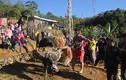 Ảnh: Điều đặc biệt trong lễ đâm trâu ở Quảng Nam