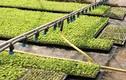 Độc đáo ý tưởng vườn rau siêu tiện ích cho gia đình