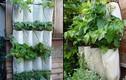 Độc đáo trồng rau sạch bằng túi vải