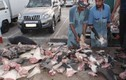 Thảm cảnh của nhiều loài cá mập quý