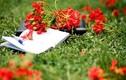 Màu hoa mùa chia ly