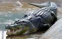 Kinh hoàng phát hiện thi thể người trong bụng cá sấu