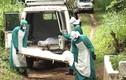 Hình ảnh khủng khiếp về đại dịch Ebola trên toàn thế giới