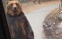 Video: Gấu bị ép đi giống người gây sốc tại Hàn Quốc