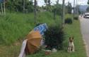 Chú chó dầm mưa dãi nắng đợi chủ suốt 2 tháng