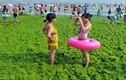 Khách du lịch TQ đổ xô đến bãi biển tảo xanh