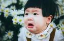 Hài hước bộ ảnh em bé mếu máo giữa vườn cúc hoạ mi