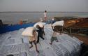 Bộ Công Thương kiến nghị tiếp tục thực hiện xuất khẩu gạo