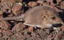 Chuột chù và những khám phá gây sửng sốt nhất