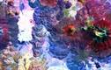NASA công bố chùm ảnh Trái đất đẹp nhất từ không gian