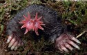 Rợn tóc gáy 5 loài vật có ngoại hình của...quỷ