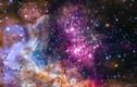 Những sự thật thú vị về các ngôi sao bạn không ngờ tới