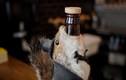Khám phá loại bia đặc biệt đựng trong... xác thú