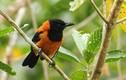 Khiếp sợ loài chim đẹp sặc sỡ, chỉ vuốt ve đã gây chết người