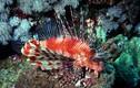 Run sợ loài cá có thể đâm xuyên da thịt con người
