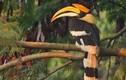 Khám phá loài chim cổ, giống trên mặt trống đồng có ở VN