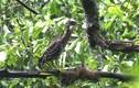 Khám phá bất ngờ chim vạc hoa rất hiếm ở Việt Nam