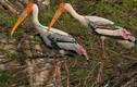 Bật mí thú vị chim Giang Sen quý hiếm ở Việt Nam