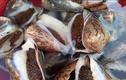 Khám phá thú vị về ốc vôi, đặc sản miền biển Việt Nam