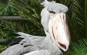 Bất ngờ với 14 loài động vật kỳ dị, không ai tin chúng tồn tại