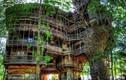 Video: Bên trong ngôi nhà trên cây đồ sộ nhất thế giới trước khi bị thiêu rụi