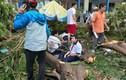 """Phượng bật gốc đè chết học sinh: """"Mổ xẻ"""" lý do cây đổ"""