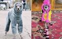 """""""Choáng"""" với lượng theo dõi instagram của chú chó siêu mẫu xài đồ hiệu"""