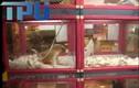 Máy bán hàng tự động kỳ lạ nhất thế giới: Bán cả... thú cưng