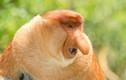 Động vật sở hữu chiếc mũi kỳ dị, không ai tin chúng tồn tại