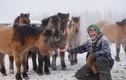 Tìm hiểu loài ngựa huyền thoại có thể sống ở âm 70 độ C